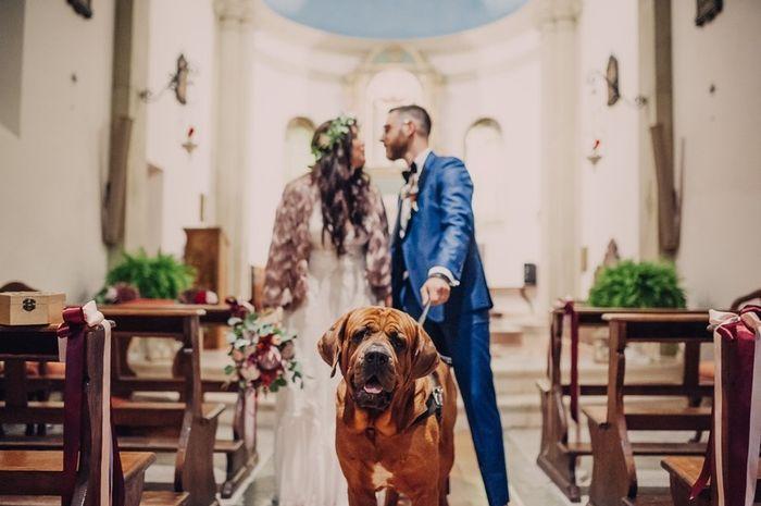 Foto di nozze con i nostri amici animali 1