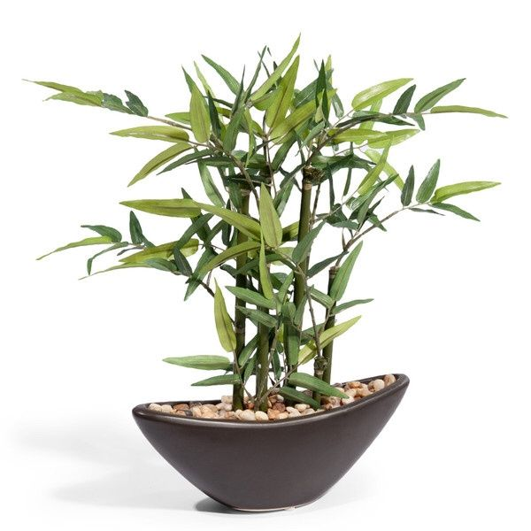 Cosa vi ha regalato per san valentino il vostro futuro for Fausse plante ikea
