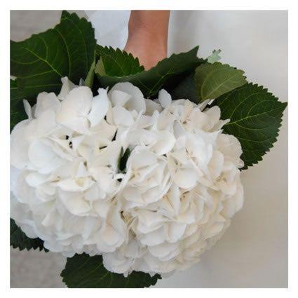 Bouquet ortensie bianche foto for Ortensie bianche