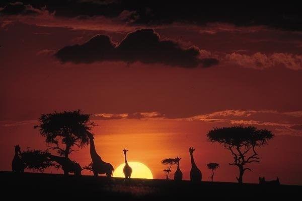 Il nostro viaggio di nozze - Sud Africa e Mauritius
