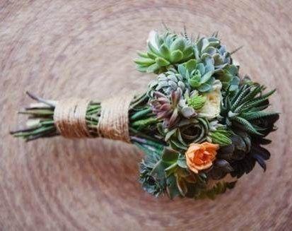 il bouquet della sposa, piante grasse 7