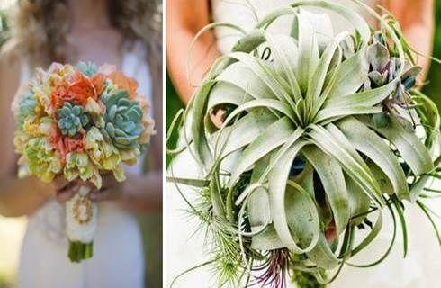 il bouquet della sposa, piante grasse 14
