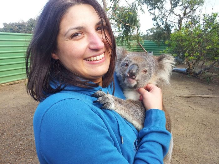 koala laura
