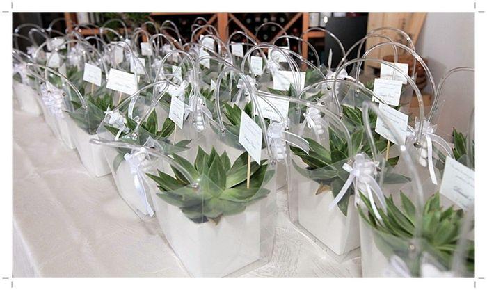 Piante Bomboniere Fai Da Te : Bomboniere piante grasse fai da te forum matrimonio