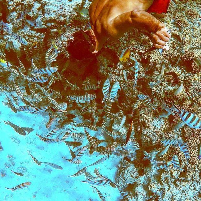 Per tutte le sposine che andranno a Bora Bora 🌺 7