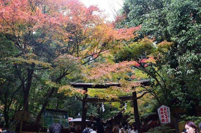 Viaggio in Giappone a maggio 1
