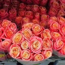 ROSE BELLISSIME