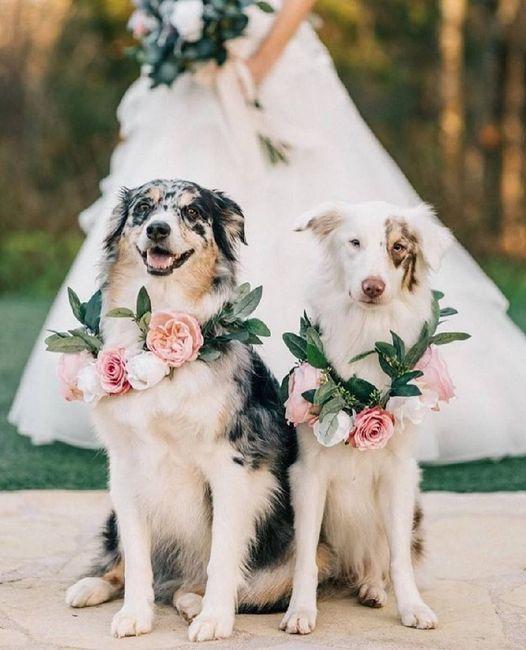 i nostri amici pelosi nel giorno delle nozze ❤️😍🐺🐱 1