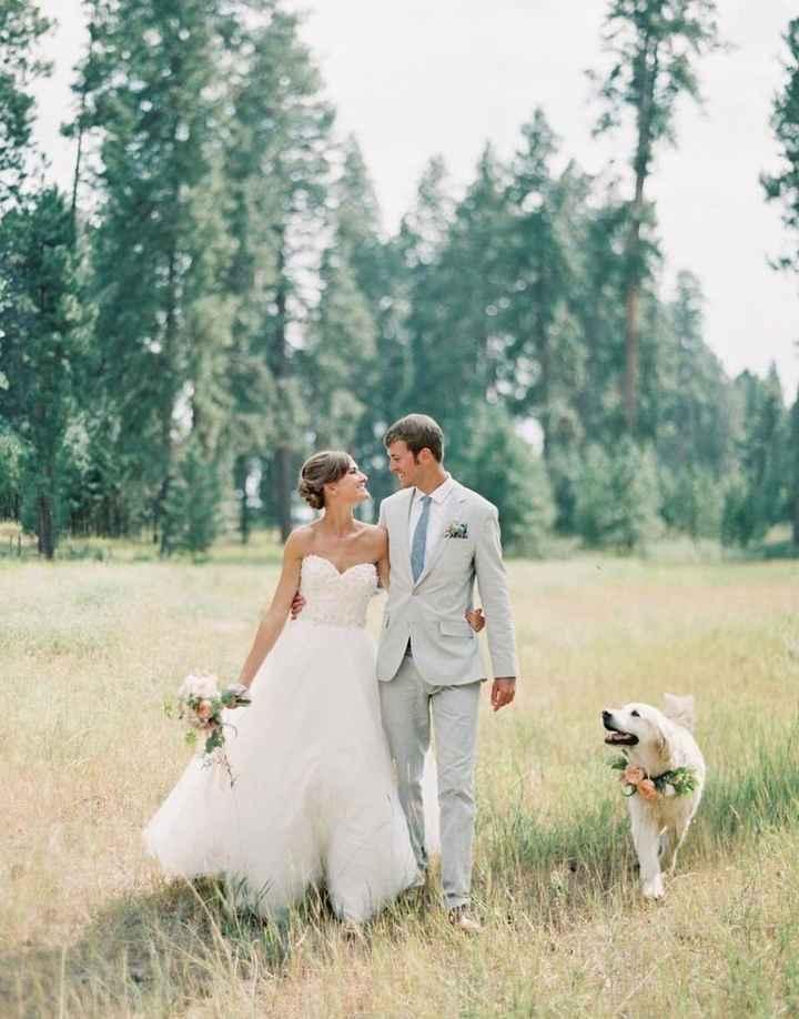 i nostri amici pelosi nel giorno delle nozze ❤️😍🐺🐱 - 2