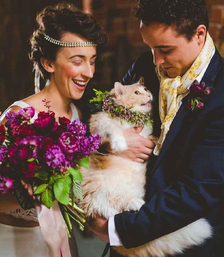 i nostri amici pelosi nel giorno delle nozze ❤️😍🐺🐱 - 8