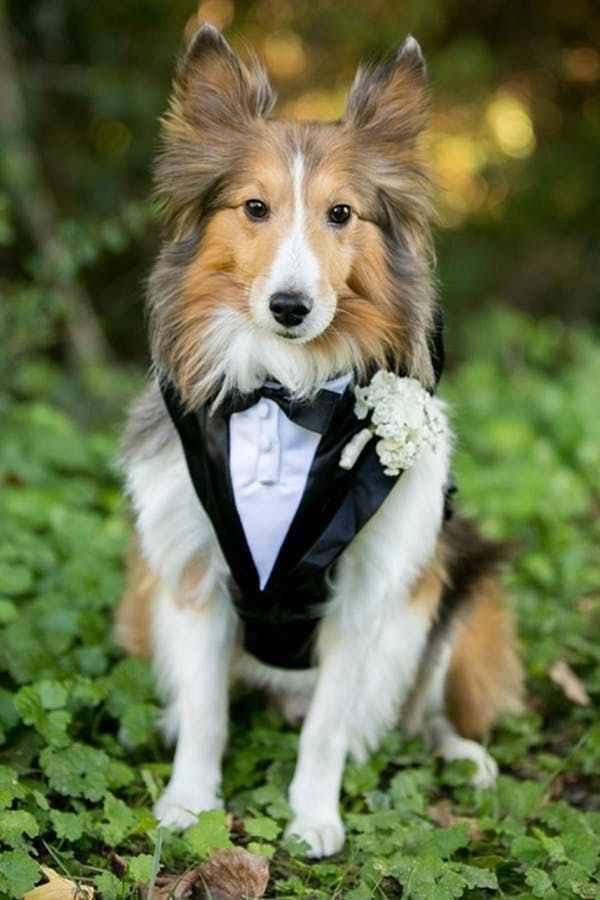 i nostri amici pelosi nel giorno delle nozze ❤️😍🐺🐱 - 11