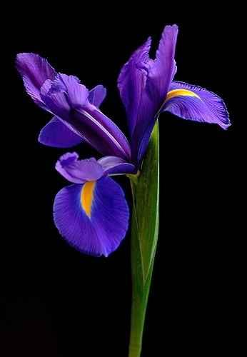 Fiori di questo bouquet - 1