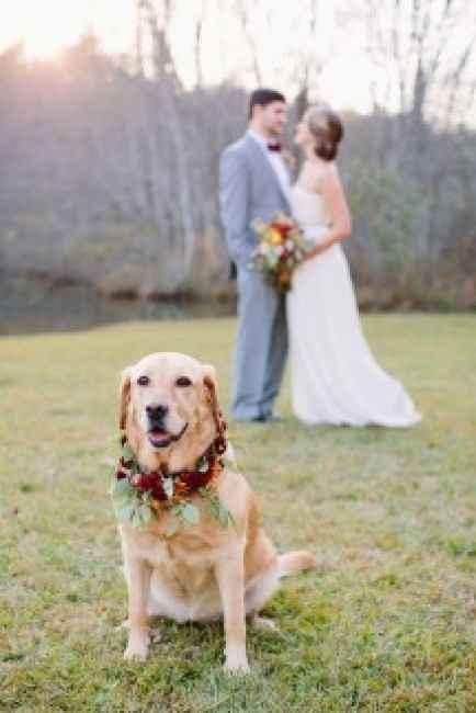 canealle nozze