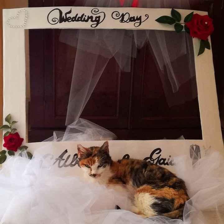 I gatti, i preparativi e il matrimonio: fateci vedere le loro foto! 📸 - 1