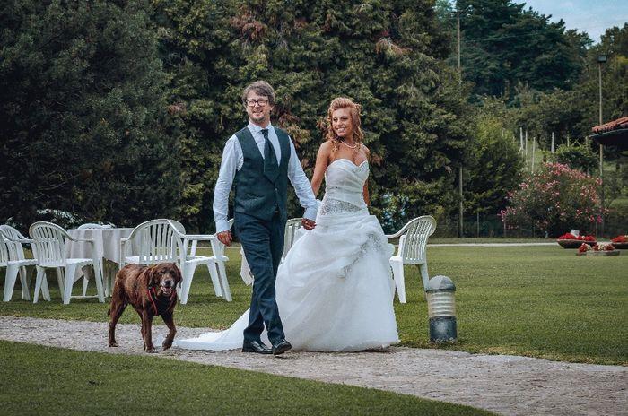 Foto di nozze con i nostri amici animali 13