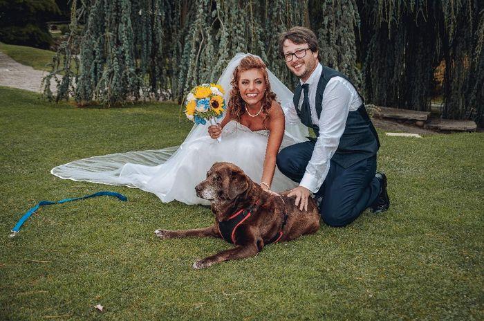 Foto di nozze con i nostri amici animali 14