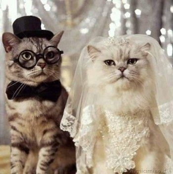 Il mio tema matrimonio: gatti! - 1