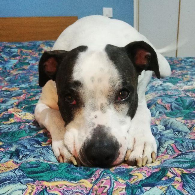 Consigli Dog sitter a Verona - 1