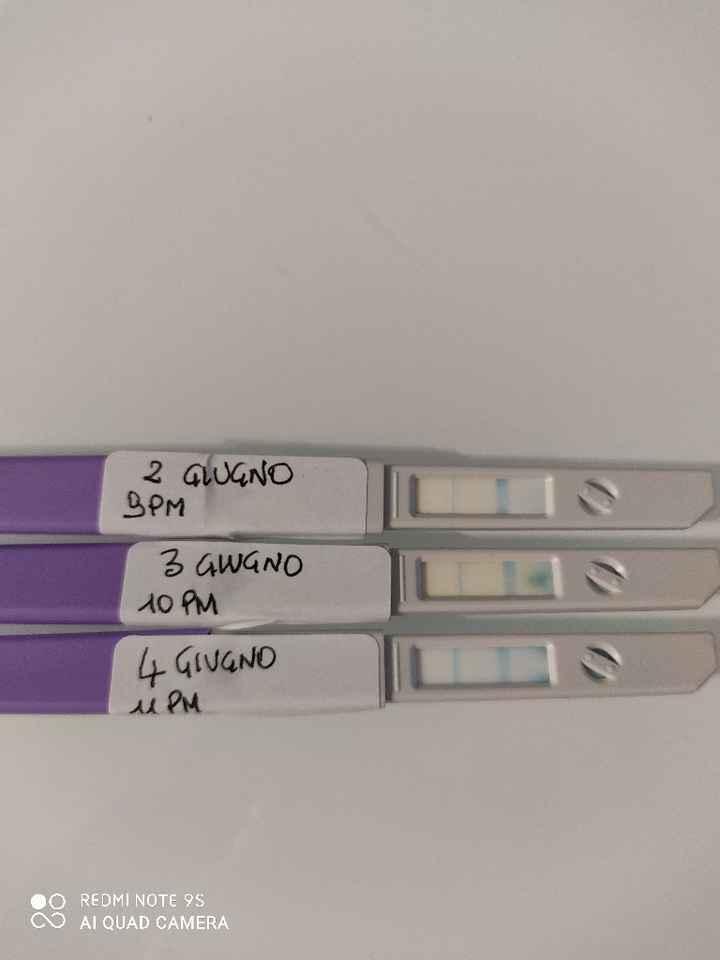 Clearblue viola - 1