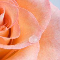 Pareri su fiori del mio bouquet - 1