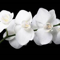 Pareri su fiori del mio bouquet - 3