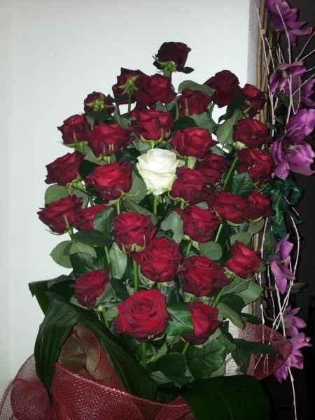 Trenta rose