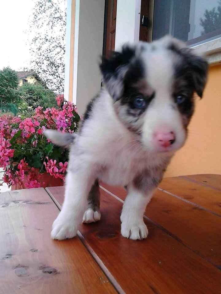 Nuovo cucciolo - 1