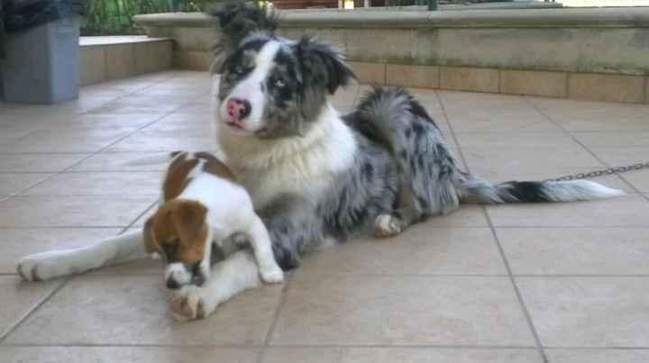 Nuovo cucciolo - 2