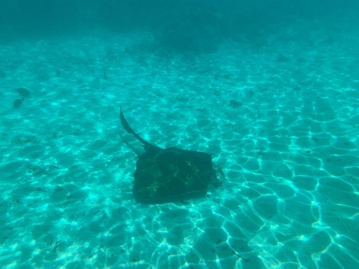 Viaggio alle Maldive 😍😍 6
