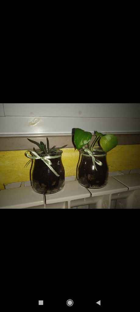 Fornitori piante matrimonio.com e online... - 1