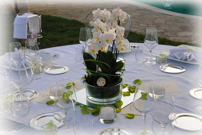 Matrimonio Tema Orchidee : Orchidee organizzazione matrimonio forum