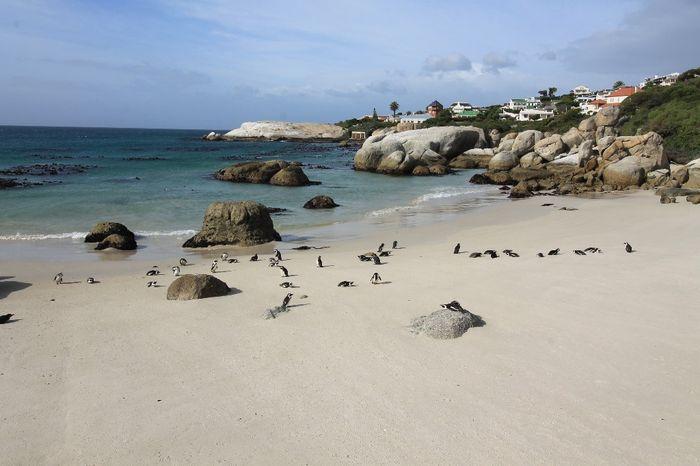 Spiaggia dei pinguini