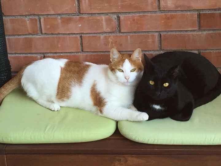 Sposine e gatti - 2