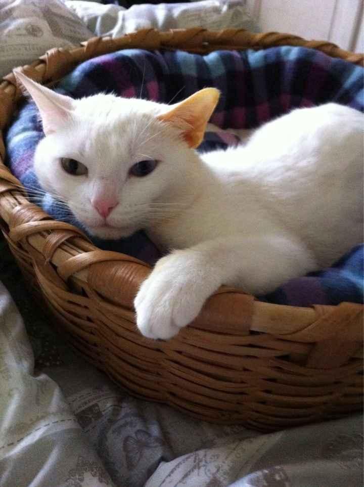 Sposine e gatti - 3