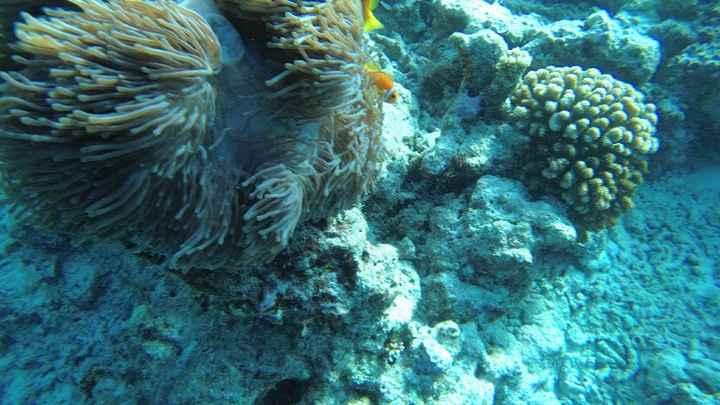 Maldive..quale resort scegliere??😍 - 3