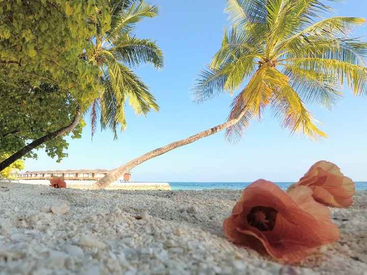 Maldive, Meeru Island Resort and Spa - 2