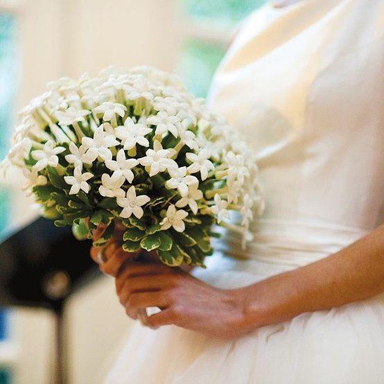 Fiori Per Bouquet Sposa Luglio.Fiori Per Luglio Ricevimento Di Nozze Forum Matrimonio Com