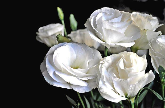 Fiori Bianchi Simili A Rose.Fiori Bianchi Simili A Rose