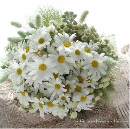 Bouquet Sposa Margherite.Margherite Per La Sposa Che Ne Dite Organizzazione