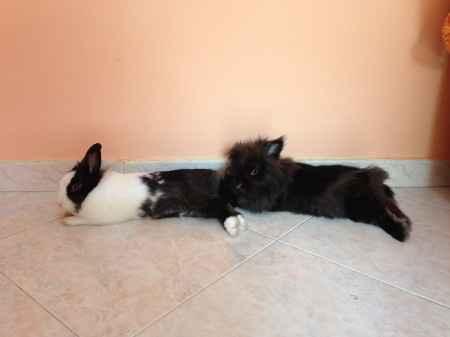 Too cute: i vostri amici animali - 1