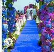viola blu