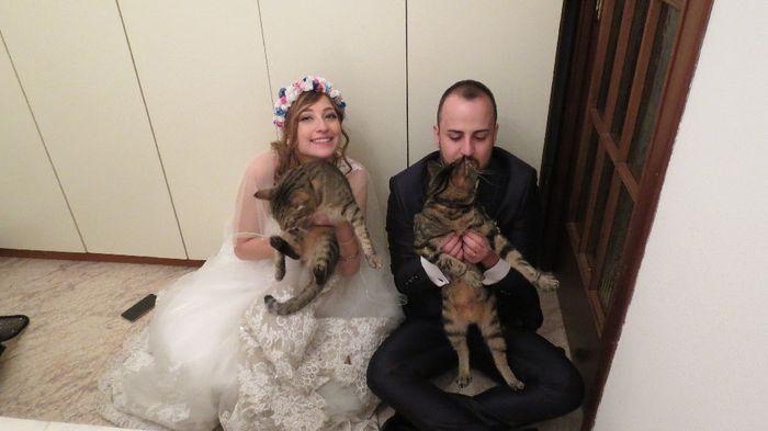 Wedding Cats!!! 10
