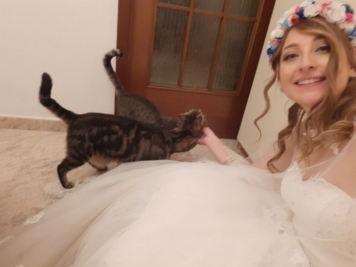 Wedding Cats!!! 8