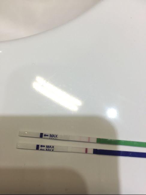 Test ovulazione vs test gravidanza 6