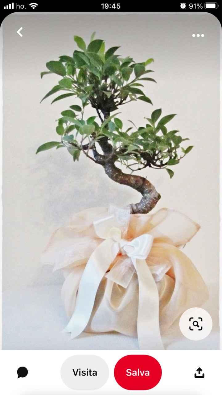 sos bomboniera bonsai - 1