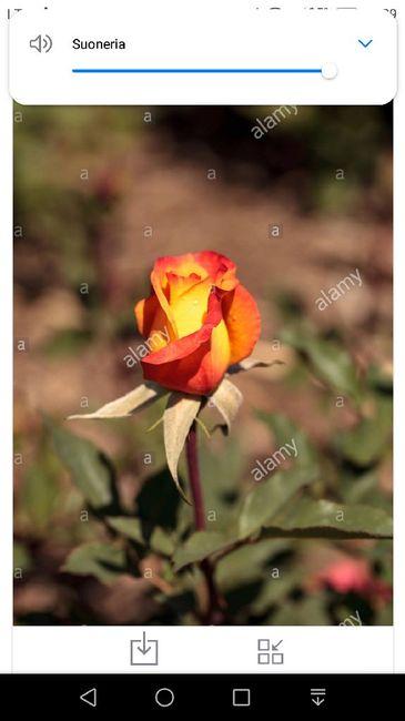 Che fiori metterete in chiesa 3