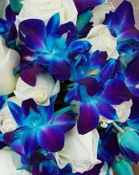 Qual è il tuo fiore preferito? - 1