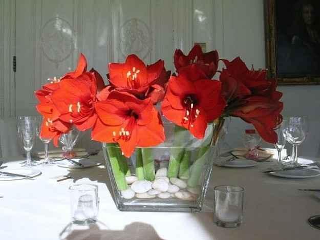 Aiuto fiori rossi... - 2