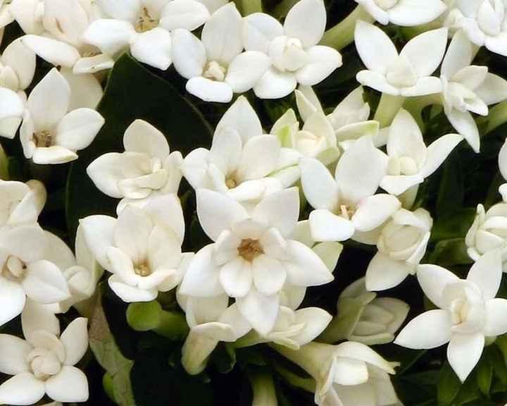 All white...spero vi piacciano!! - 2