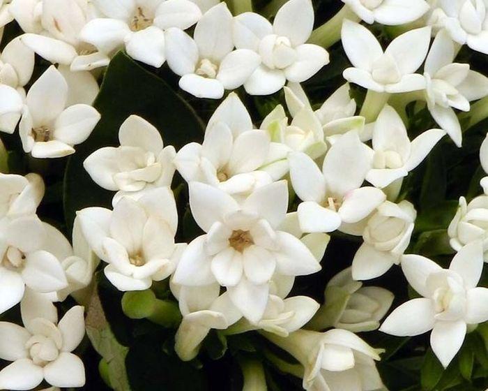 Peonie Ortensie Matrimonio : Spose di luglio che fiori scegliere organizzazione
